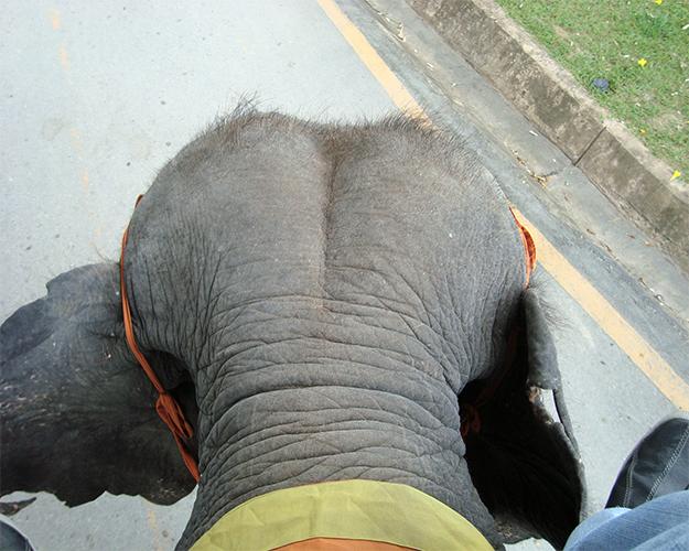 ركوب الأفيال 1