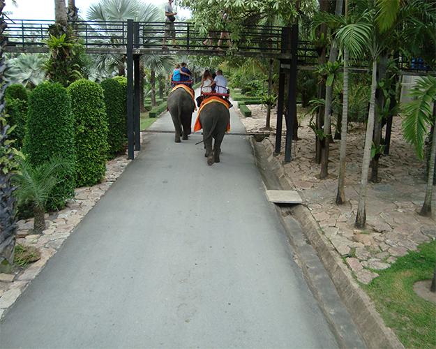 ركوب الأفيال 2