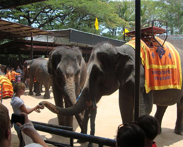عروض الأفيال 2