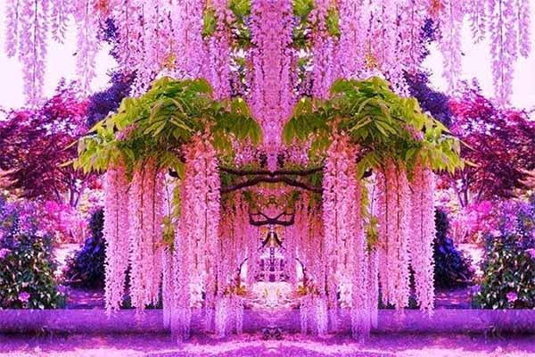 Kawachi fuji garden 2