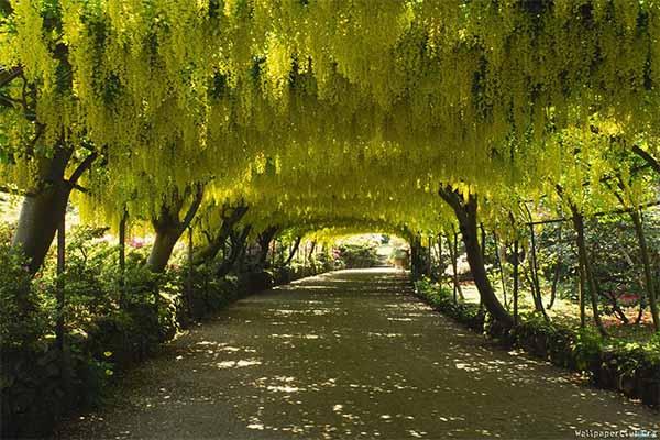 Kawachi fuji garden 8
