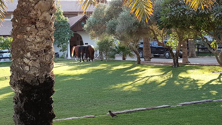 desert-palm-hotel-%d9%81%d9%86%d8%af%d9%82-%d8%af%d9%8a%d8%b2%d8%b1%d8%aa-%d8%a8%d8%a7%d9%84%d9%85-20