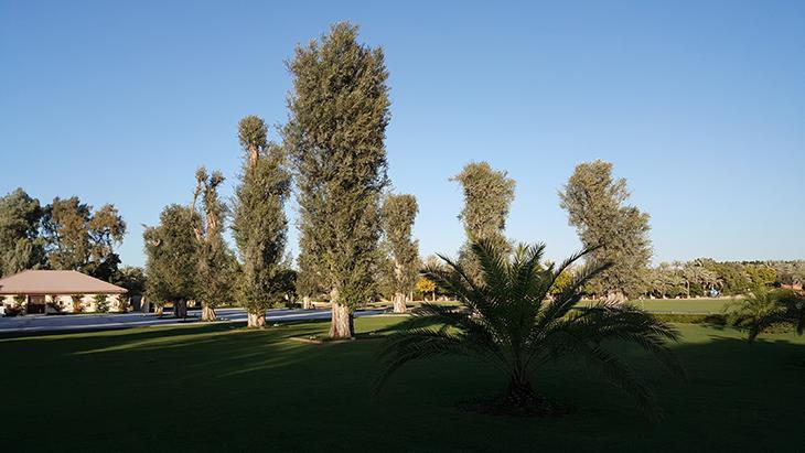 desert-palm-hotel-%d9%81%d9%86%d8%af%d9%82-%d8%af%d9%8a%d8%b2%d8%b1%d8%aa-%d8%a8%d8%a7%d9%84%d9%85-21