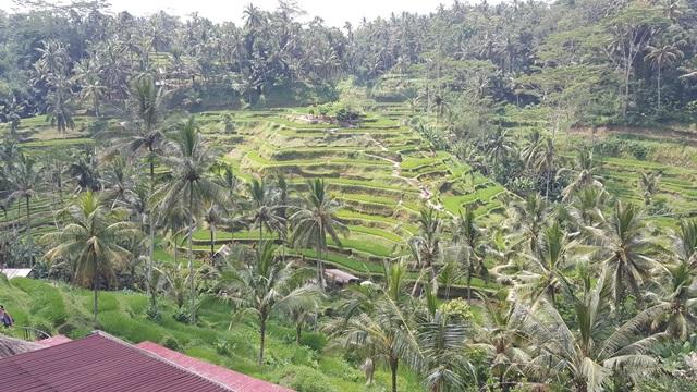 اندونيسيا (39)