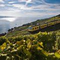 Train des vignes1