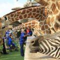 Zoo - Giraffe & Zebra Park