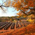3820143201500067k_Autumn at an Old House
