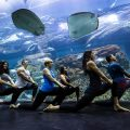 Underwater Yoga at Dubai Aquarium&Underwater Zoo