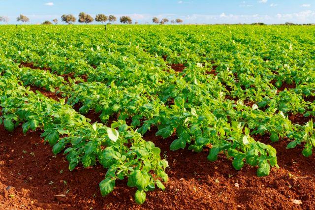 8. Cyprus Tourism Organisation - Ammochostos