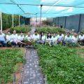 Ramada Ajman Urban Farm Harvesting (1)