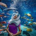 aquaventurewaterpark-sharksafari