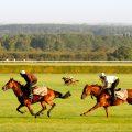 Newmarket Gallops1
