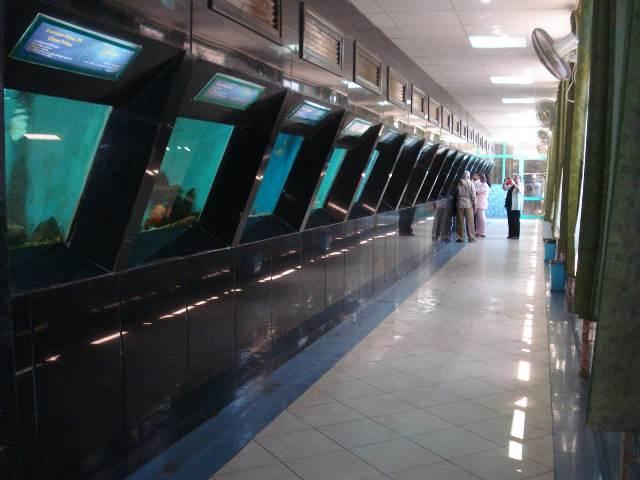 متحف الأحياء المائية 1