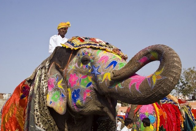 Decorated Elephant, Rajasthan