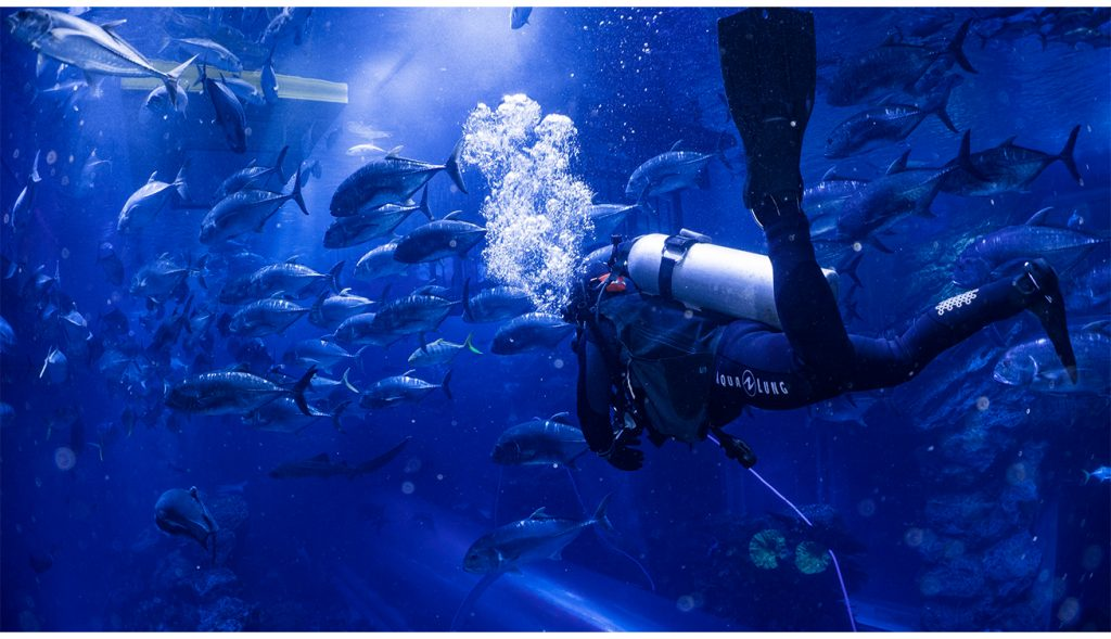 Shark Dive at Dubai Aquarium & Underwater Zoo 2
