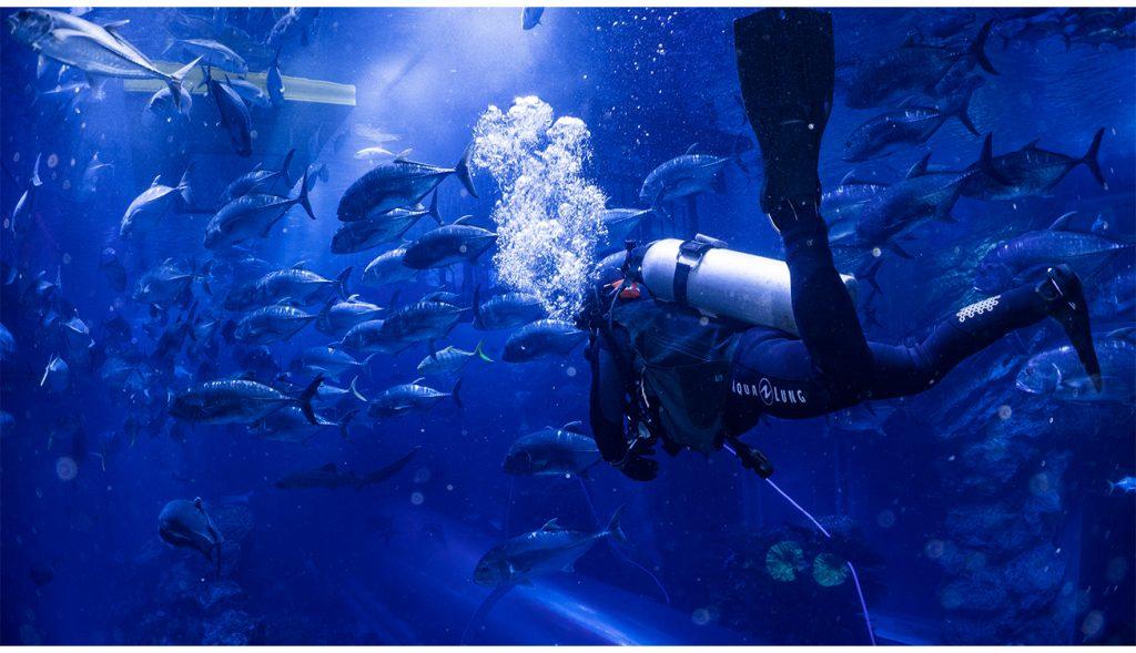 Shark Dive at Dubai Aquarium & Underwater Zoo 2