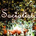 Socialista at Cipriani Yas Island - 1