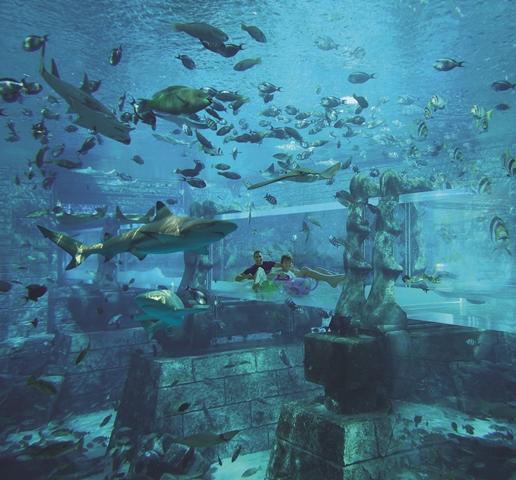 aquaventurewaterpark-sharkattack4